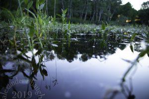 MN Tamarack Pond